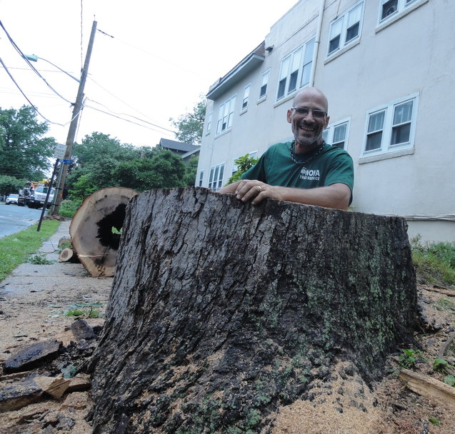 Sal Scarpato of Nova Tree Service stands inside the hollow remains of a fallen white oak in Collingswood. Credit: Matt Skoufalos.