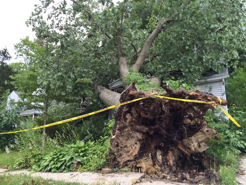 An abandoned home on Walnut Avenue in Oaklyn suffered major damage when a tree was uprooted during a recent storm. Without any owners on hand, such damage can take a while to resolve. Credit: Bryan Littel.