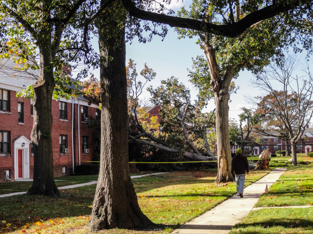 A fallen tree in the Wayne Gardens courtyard. Credit: Matt Skoufalos.