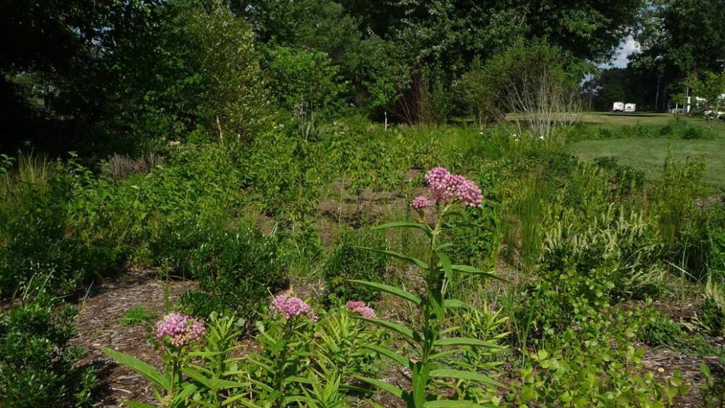 Rain garden in Audubon Park. Credit: John Nystedt.
