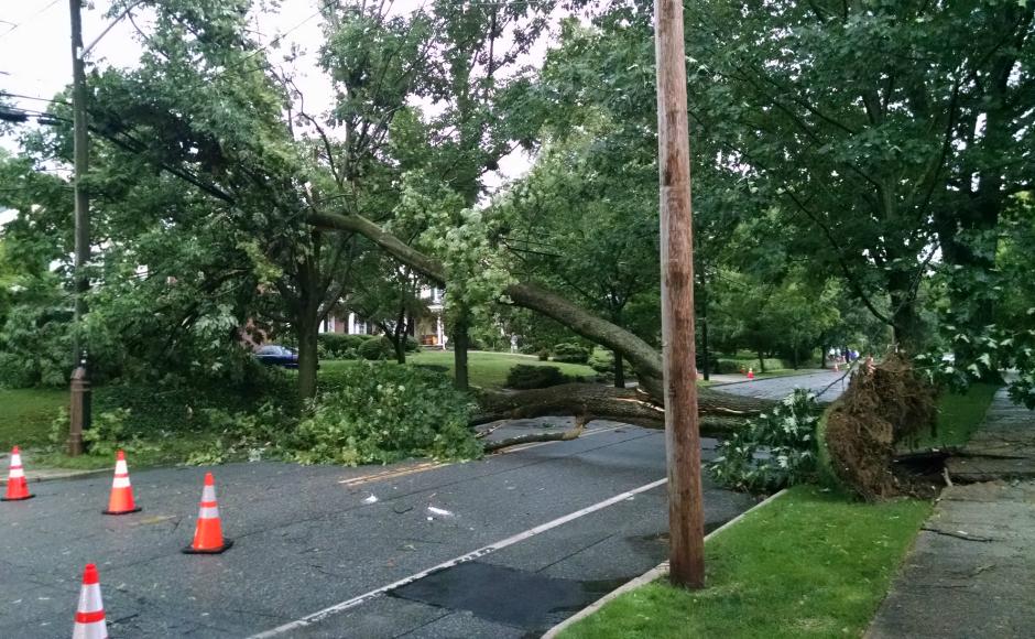 Downed tree in Haddonfield after a summer storm. Credit: Matt Skoufalos.