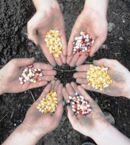 Food Sovereignty--Saving Seeds and Building Community