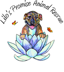 Lilo's Promise Animal Rescue 9th Annual Mutts & Martinis