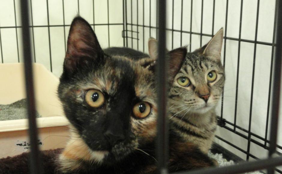 Almost Home shelter cats. Credit: Matt Skoufalos.