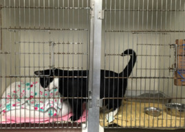 Almost Home Animal Shelter Closing in Pennsauken, Seeks Adopters