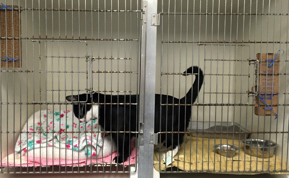 Cat kennels at Almost Home have been expanded and have fewer occupants. Credit: Abby Schreiber.