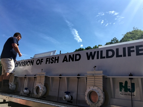 The Division of Fish and Wildlife delivered 40,000 fathead minnows to launch the Camden County hatchery. Credit: Abby Schreiber.