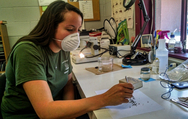 Camden County mosquito biologist Lauren Segreto. Credit: Matthew Scheuerer.