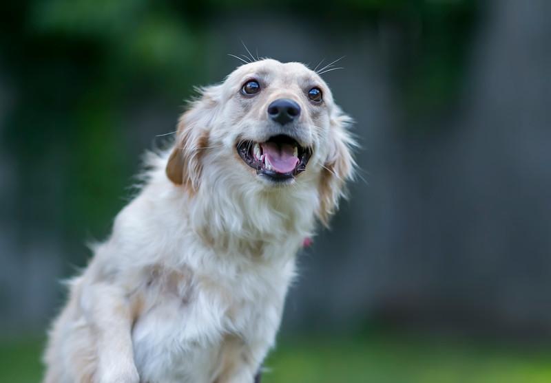 Rescue dog Roxie. Credit: Kevin Monko.