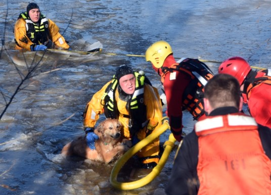 Collingswood Firefighters Rescue Dog from Cooper River