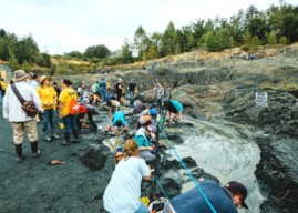 'This Time, We Are the Asteroid' – Rowan Fossil Park Offers Perspectives on Extinction