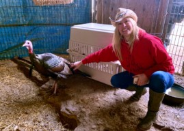 """Glenny,"" Haddon Heights Celebrity Turkey, Relocated to Funny Farm in Mays Landing"